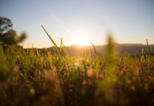 Kinsella - Field of Dreams